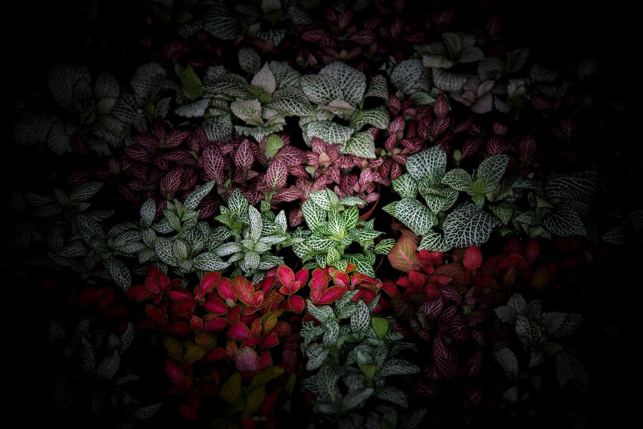 Magicaflor, ingrosso fiori e piante